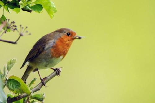 Robin by Michael Finn
